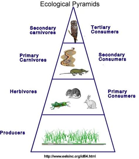Essay on ecosystem and its components